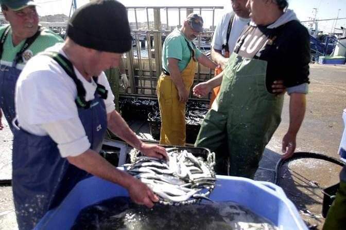Em cinco anos, consumo de sardinha caiu 63%