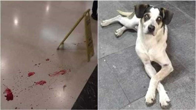 7743d3002944f O animal foi envenenado e espancado por um segurança de um centro comercial  em São Paulo ...